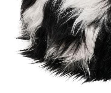 Spotted long wool - mu/va